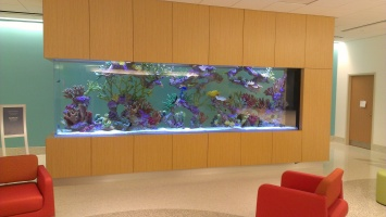 Nemours fish tanks
